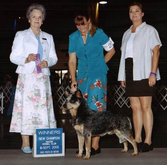 Leo AKC Championship with Laura Piles at Macon Kennel Club