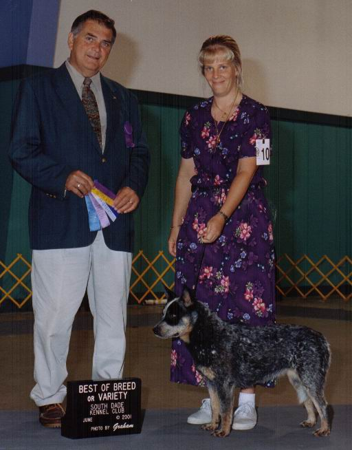 Best of Breed at Greater Miami Kennel Club