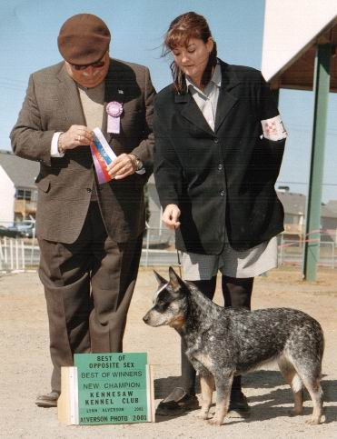 Best of Winners at Kennesaw Kennel Club