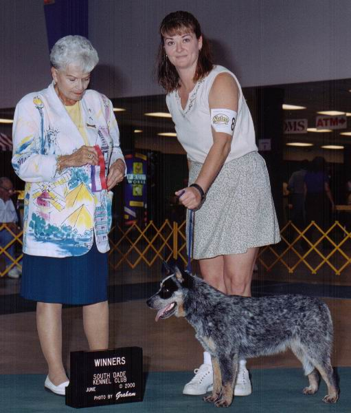Winners at South Dade Kennel Club